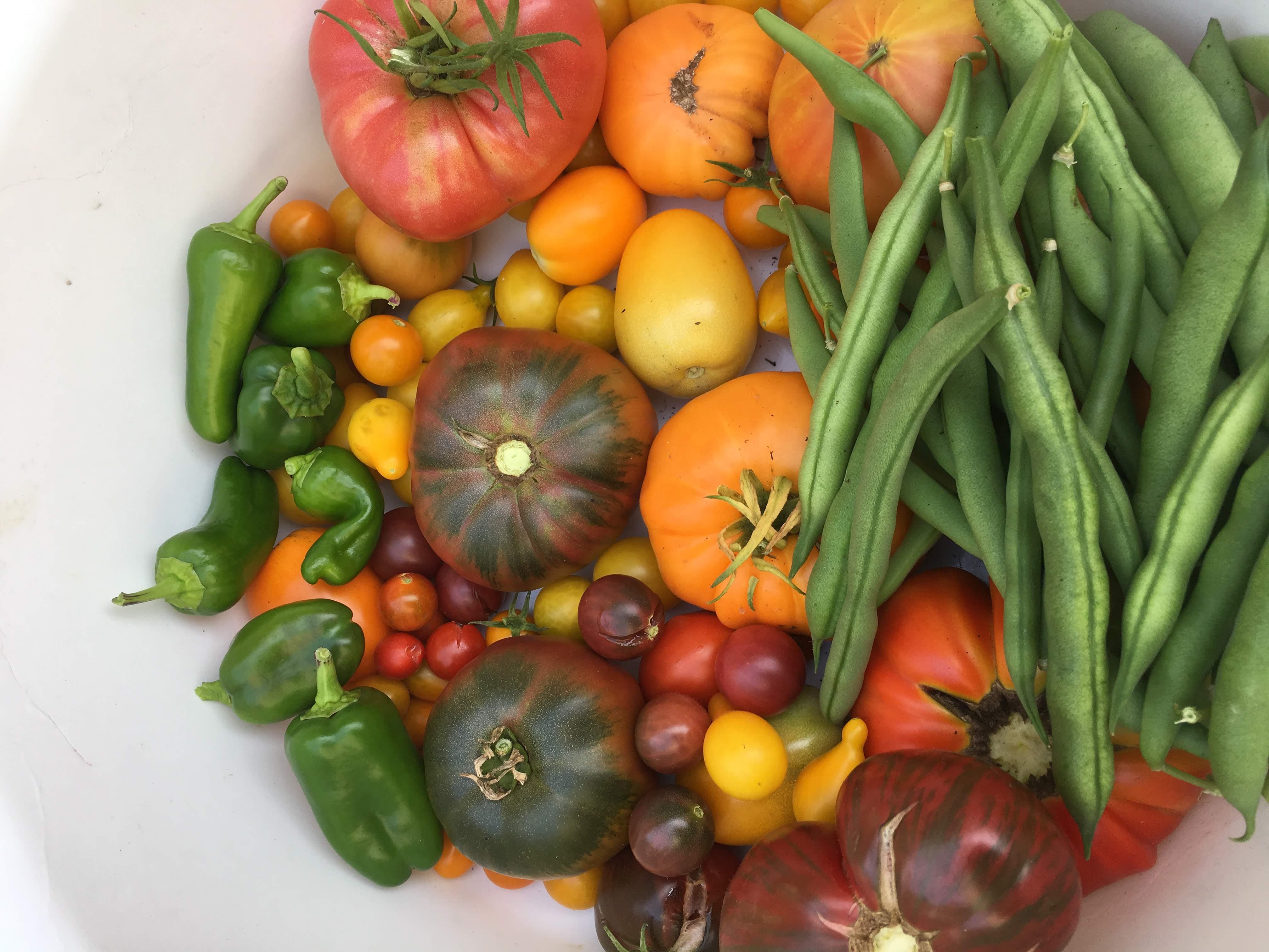 Récoltes au potager
